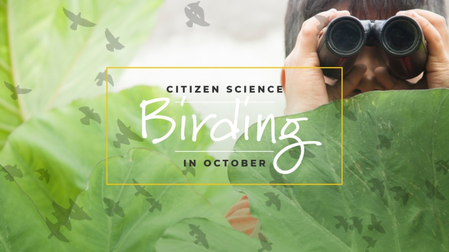 Citizen Science: Birding, Image: Child using binoculars while peaking from behind a leaf.